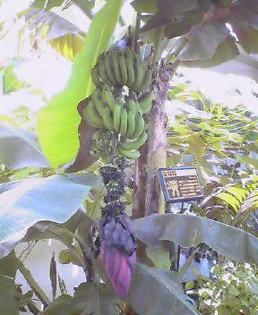そんなバナナ…(;^_^A