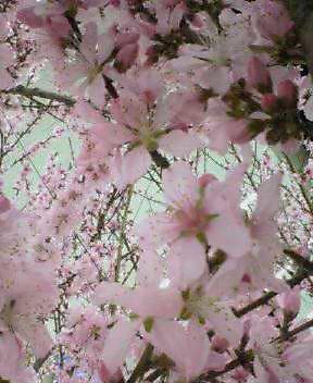 梅・桜・そして…