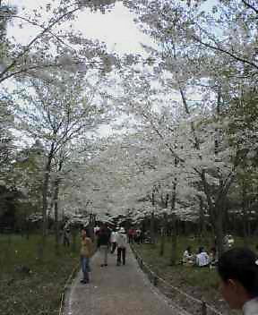 北海道の花見はジンギスカン